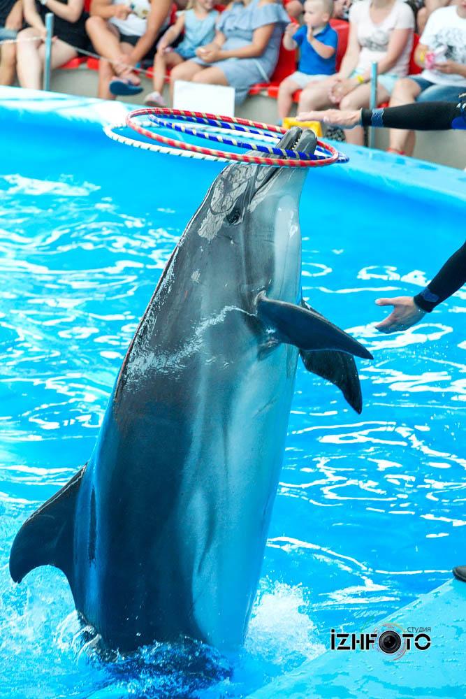 Выступления дельфинов