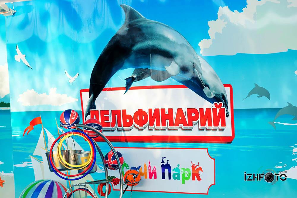 Фото дельфинов в Сочи