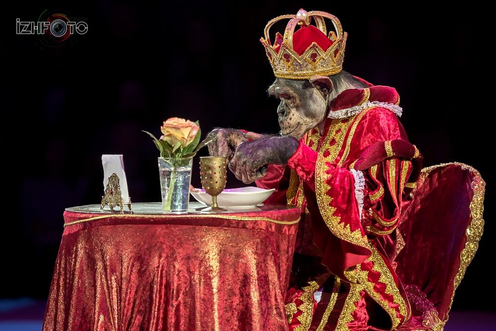 Мурад Хыдыров «Ресторан», дрессированные обезьяны