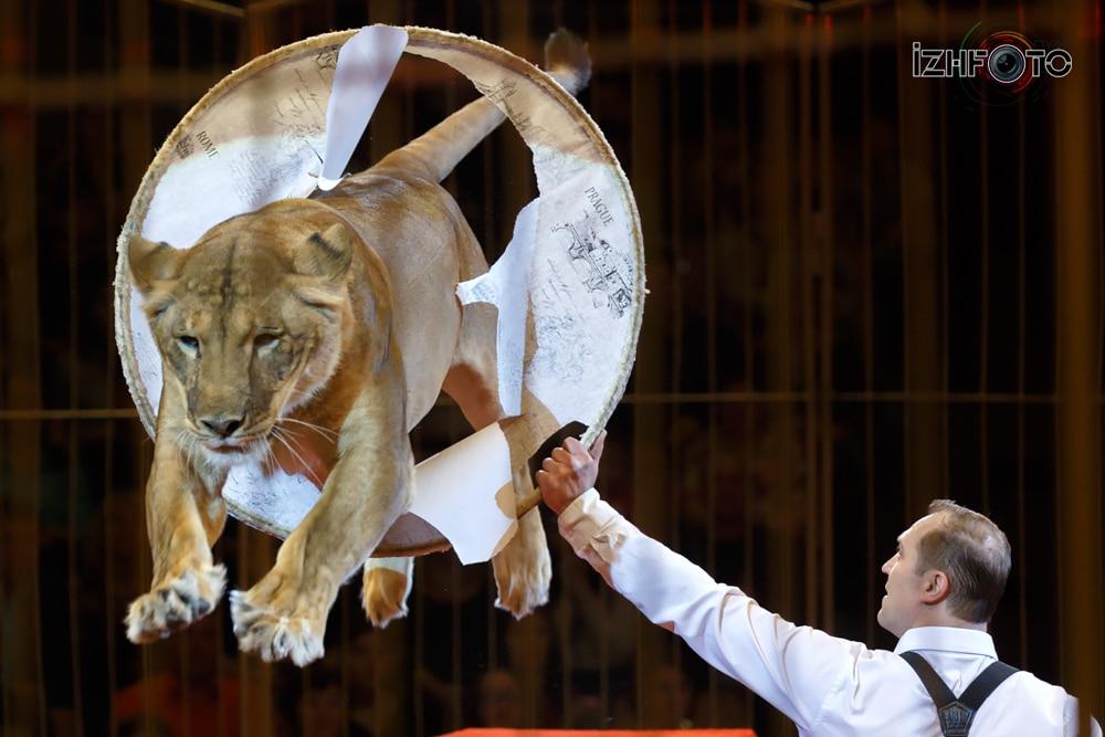 Империя львиц Виталий Смолянц