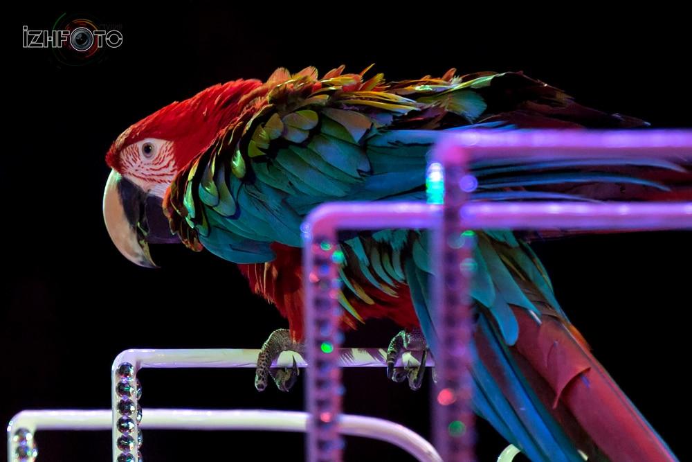 Попугаи Фото