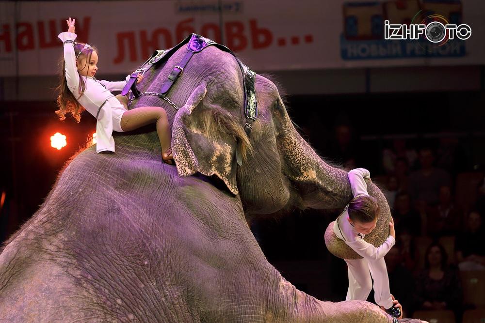 Аттракцион «Слоны» Кристиана и Алекса Гертнер