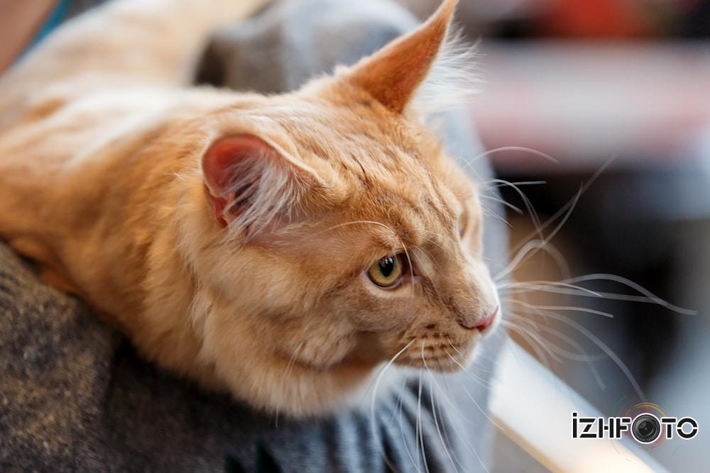 выставка кошек томск фото
