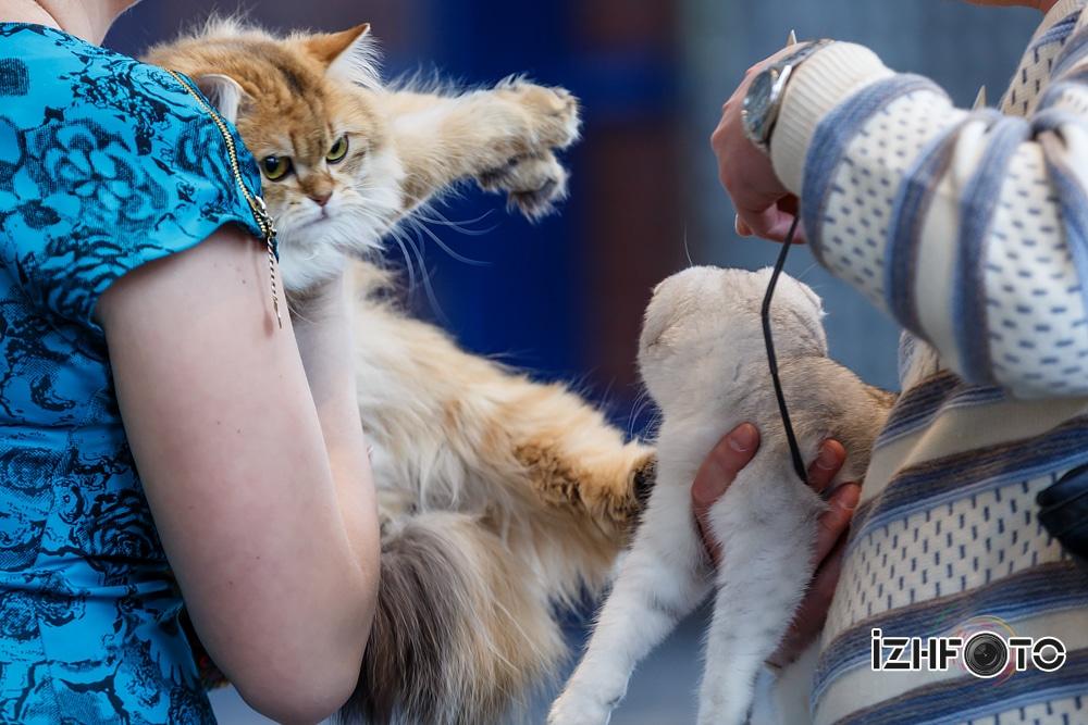 Котята ижевск