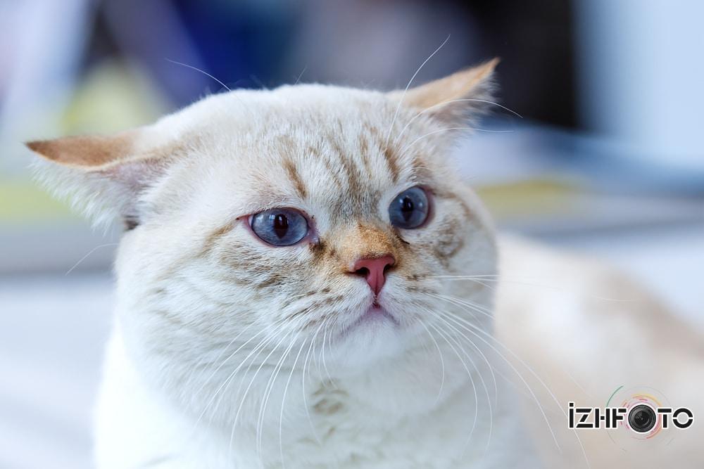 Выставка кошек Фото