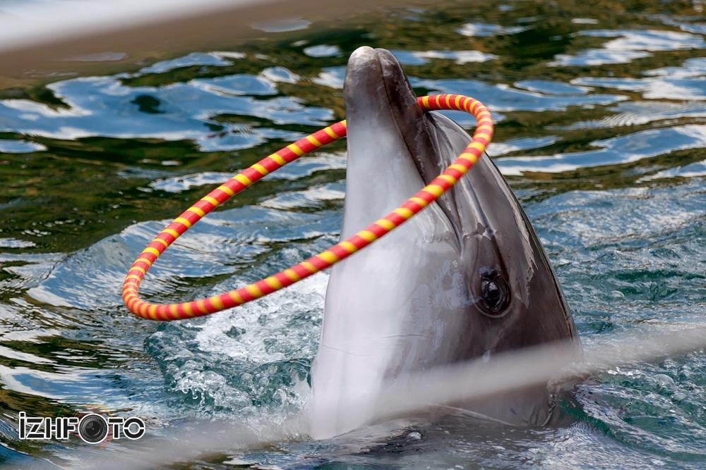 Дельфинарий Утриш Фото