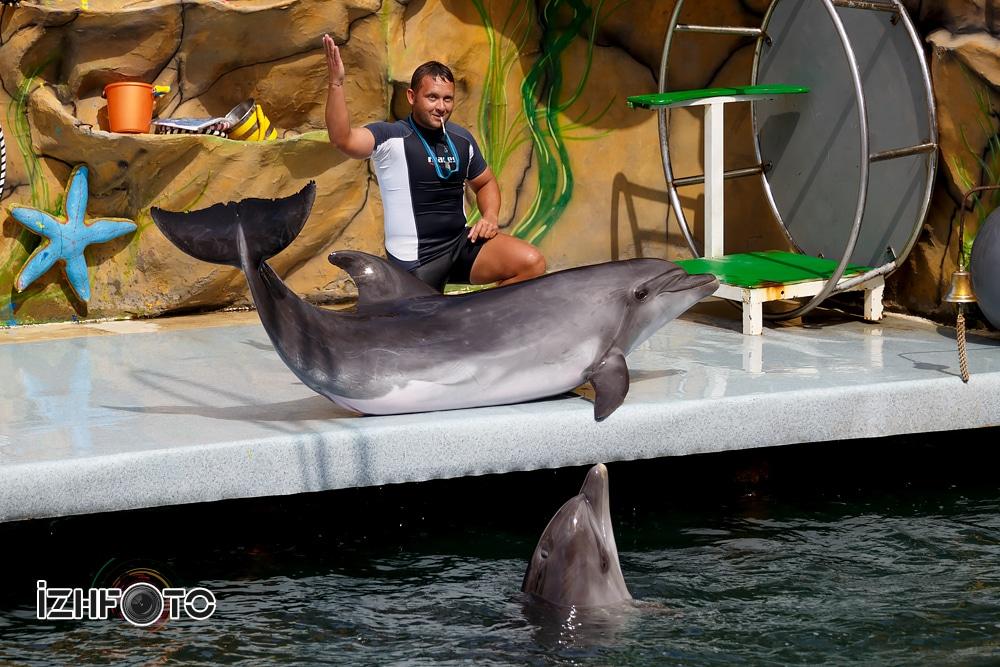 Шоу дельфинов Фото