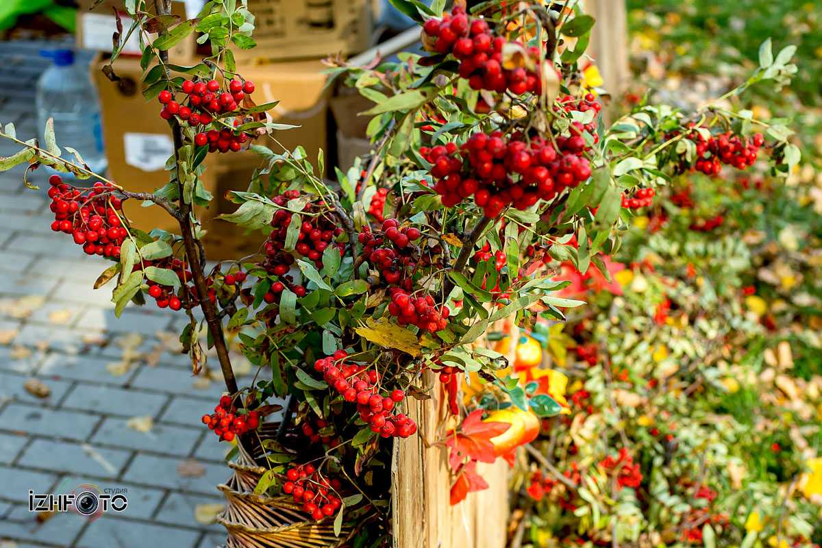 Фото с праздника Осенины