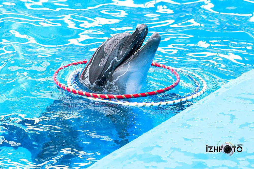 Сочи дельфинарий Адлер