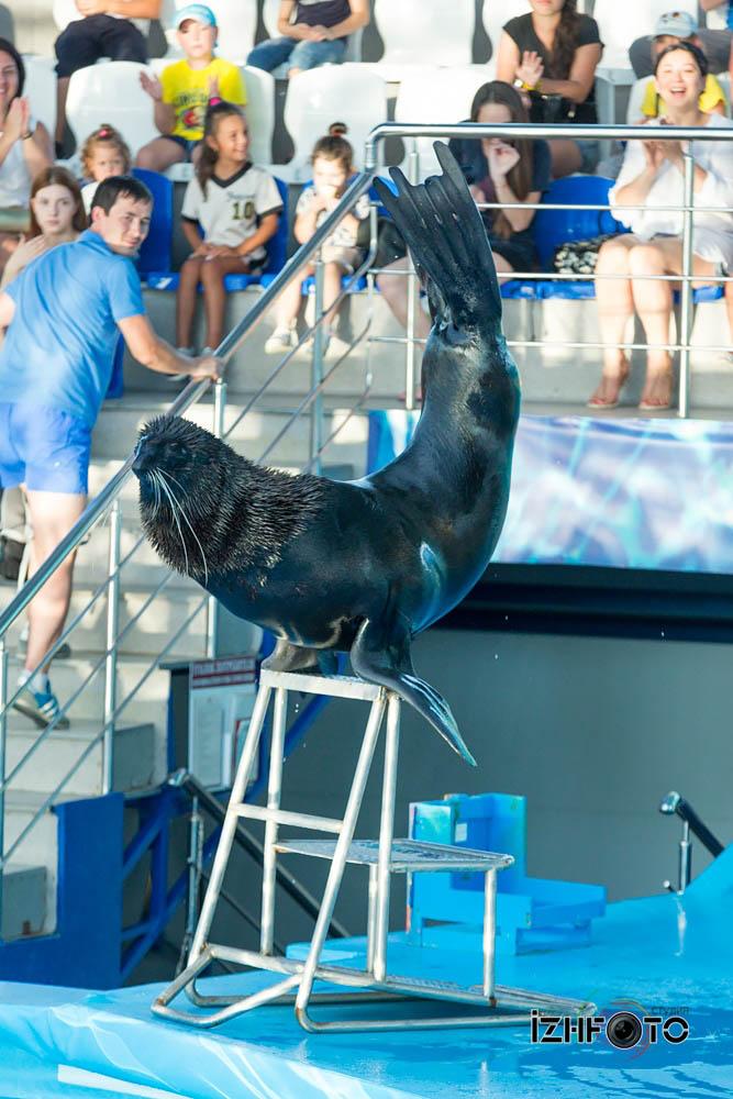 Сочи дельфинарий Фото
