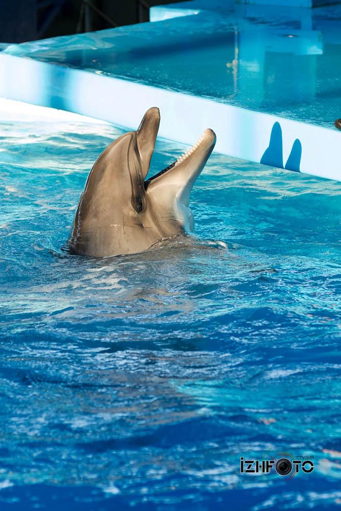 Выступления дельфинов Фото