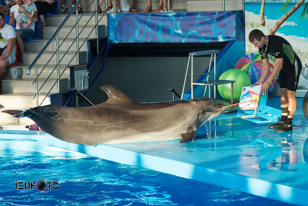 Дельфинарий Сочи