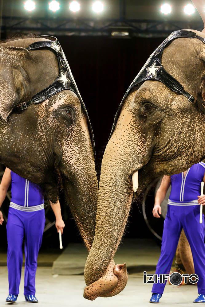 Фото циркового шоу со слонами