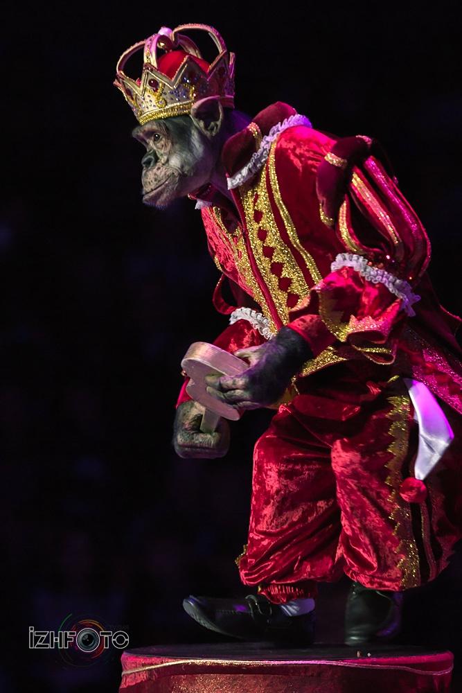 Цирк Ижевск фестиваль 2018 Фото
