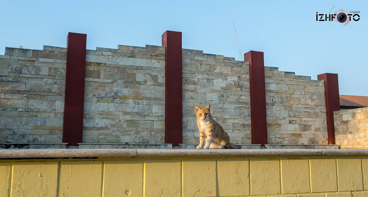 Кошки на Кипре Фото