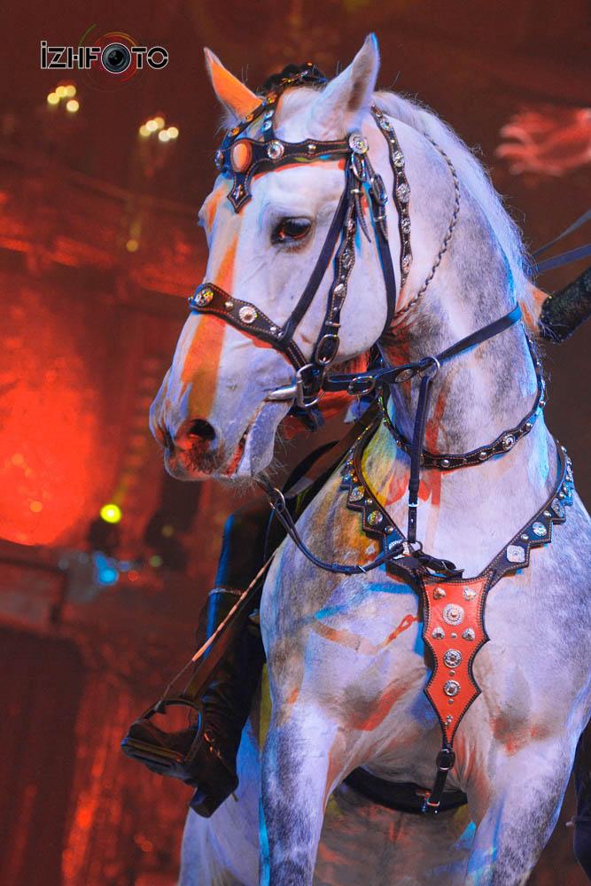 Ижевск цирк 2017