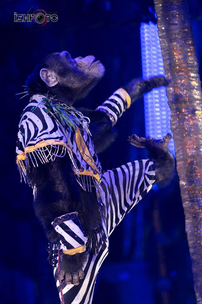 Представления в Ижевском Цирке