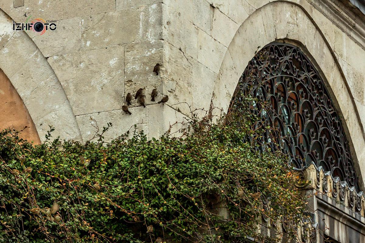 Собора Святой Софии Стамбул Фото