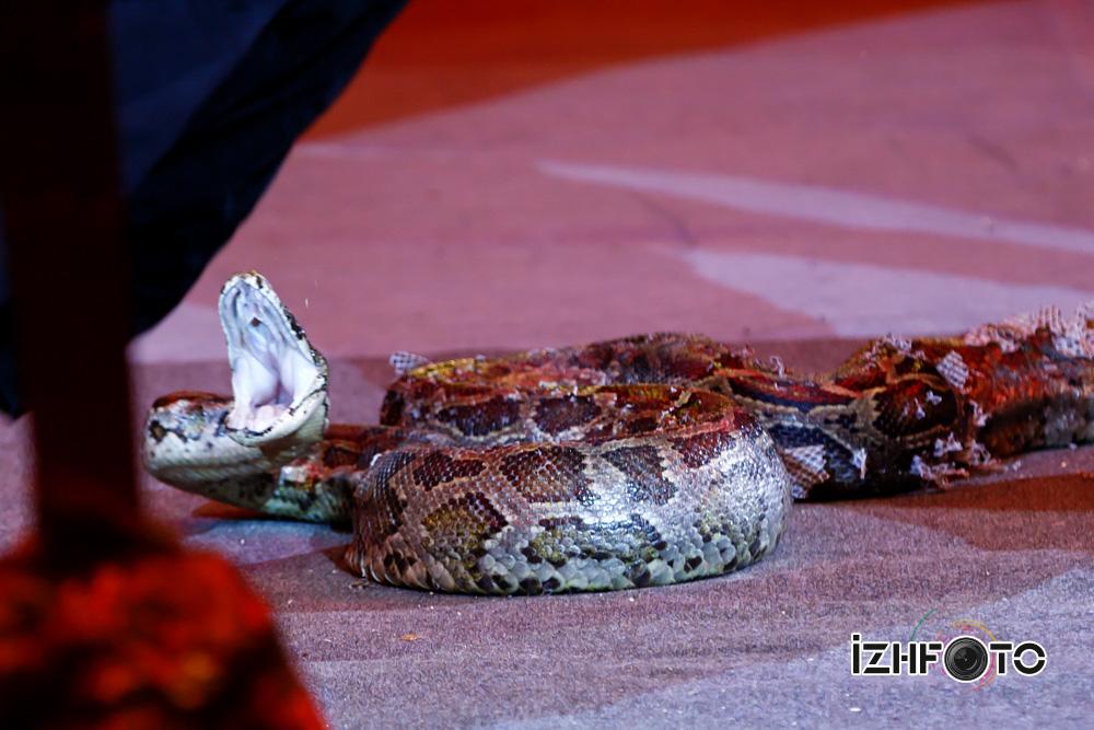 Рептилии в цирке Фото