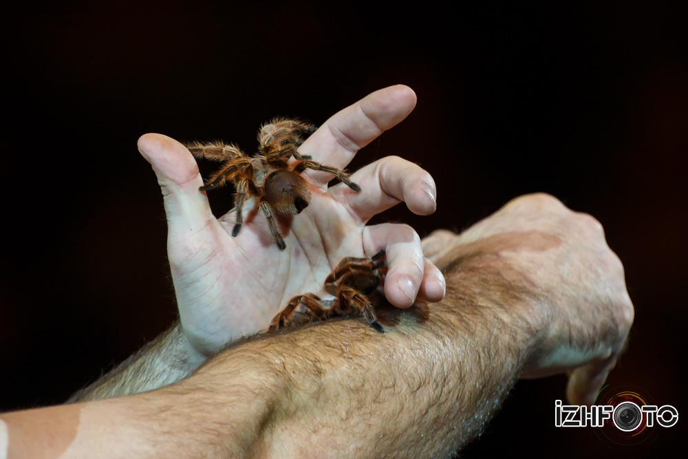 Фото номера с пауками
