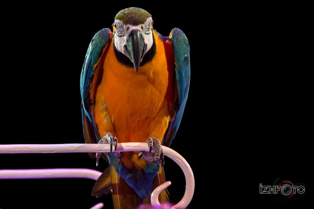 Фотографии попугаев