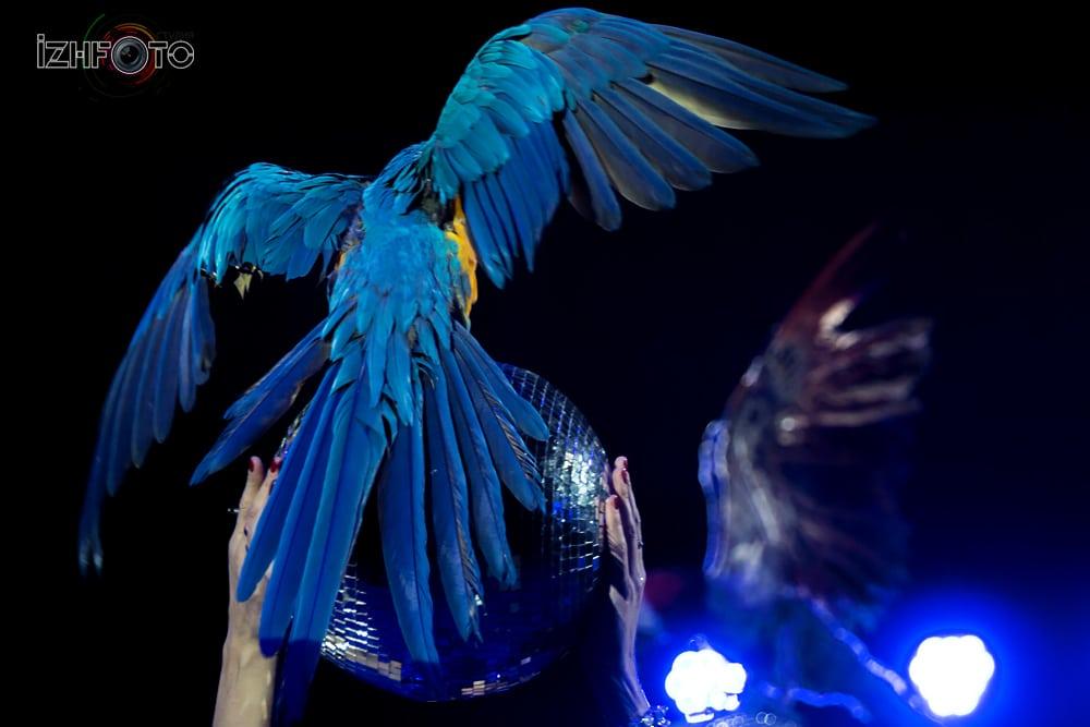 Выступление попугаев в цирке