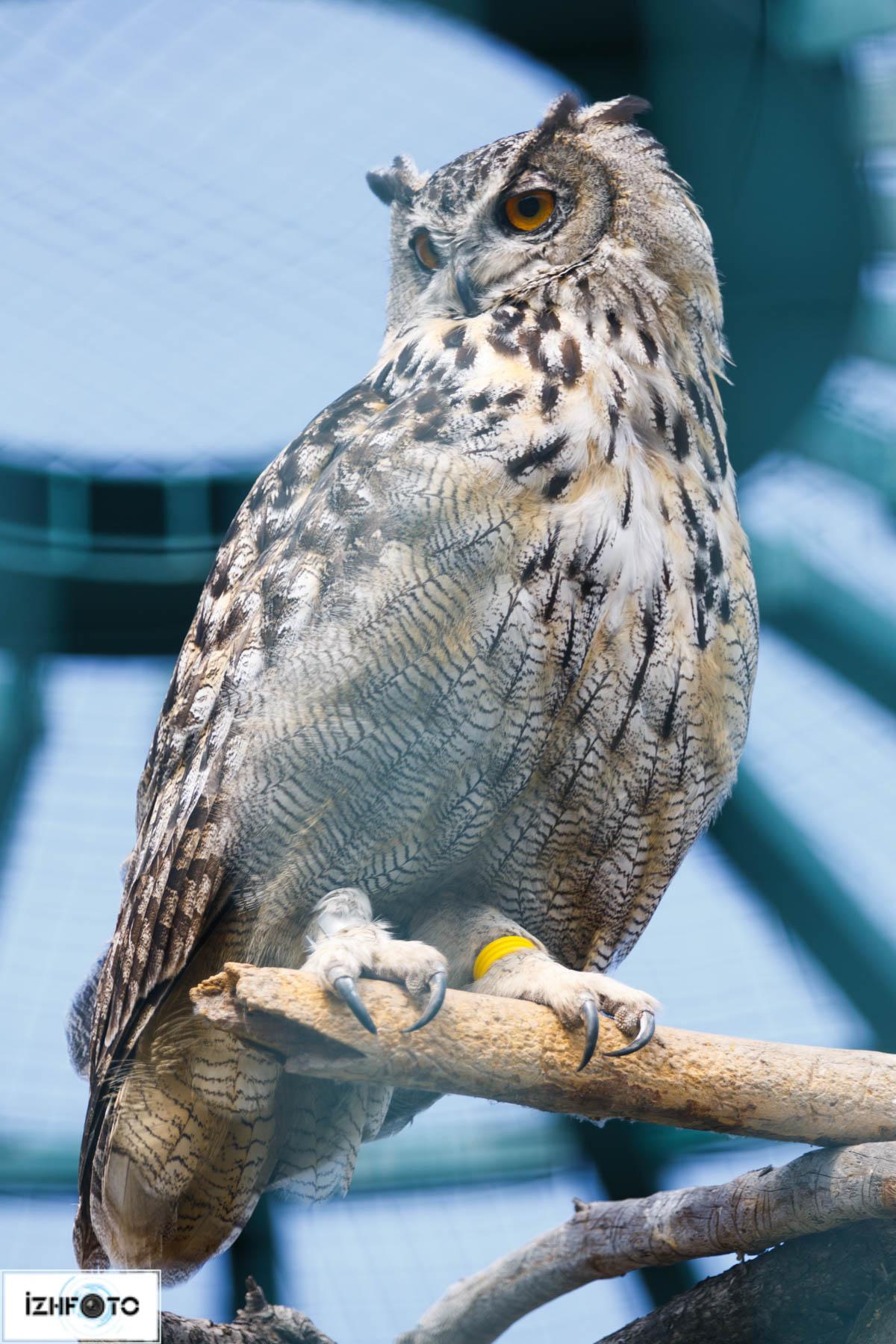 Птицы в Ижевском зоопарке