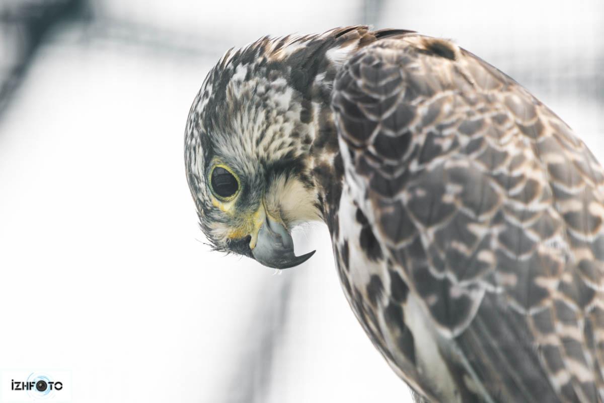 Фото Птиц в зоопарке Ижевска