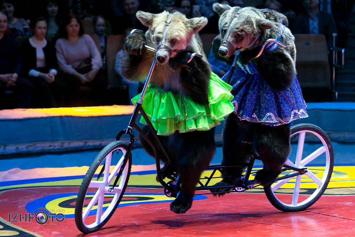 Фестиваль цирк в Ижевске Фото