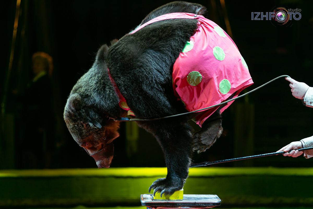 Фото цирковых представлений