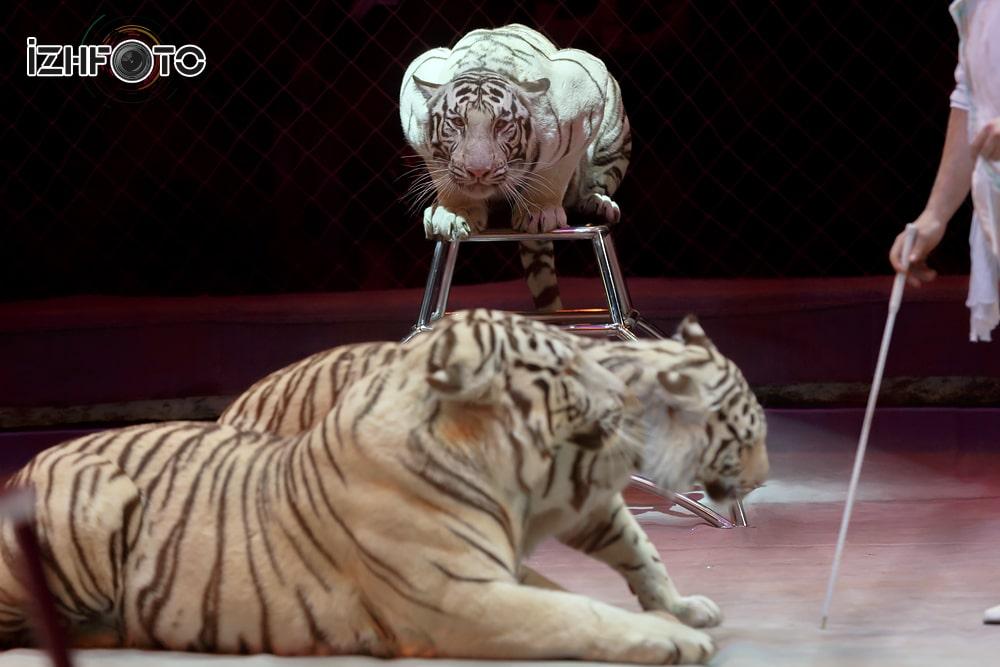 Цирк сафари Фото