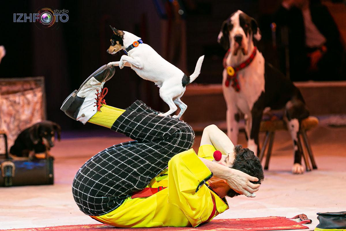 Новогоднее представление в Цирке Ижевска