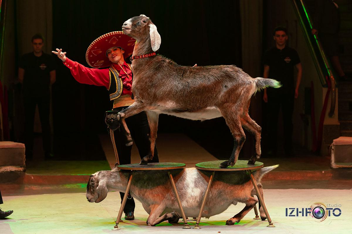 Ёлка цирк Ижевск Фото