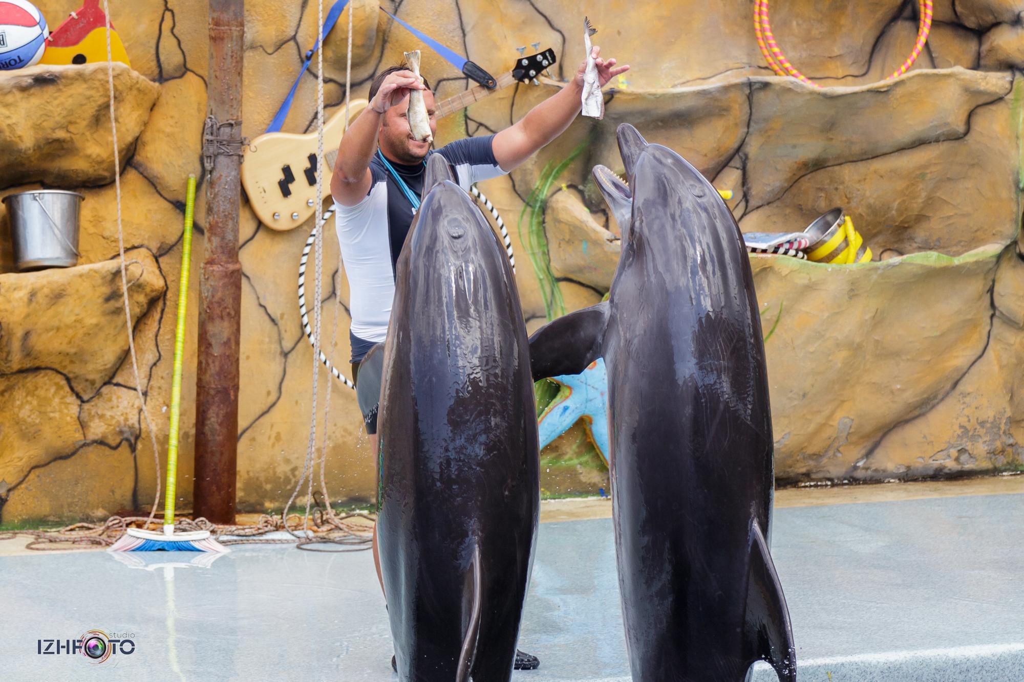 Как обедают дельфины Фото