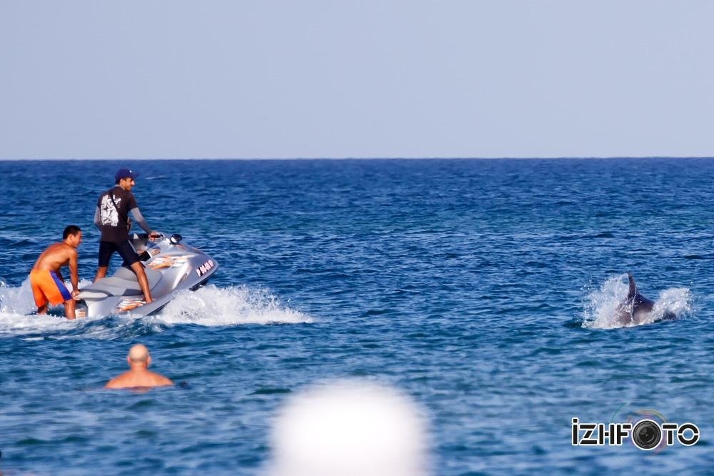 Море дельфины Фото