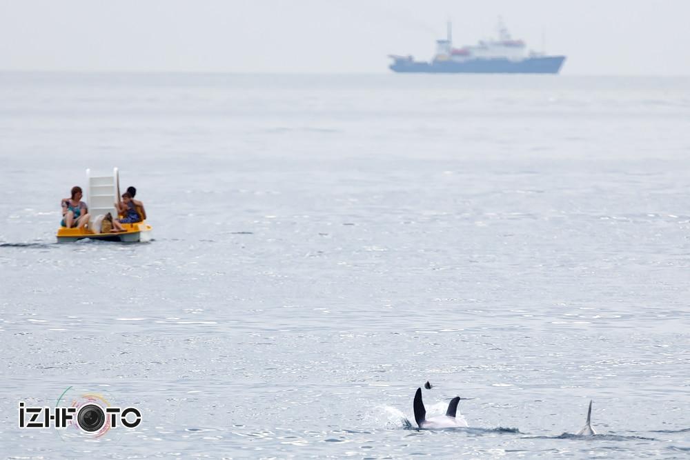 Как на черном море дельфины приплывают к отдыхающим