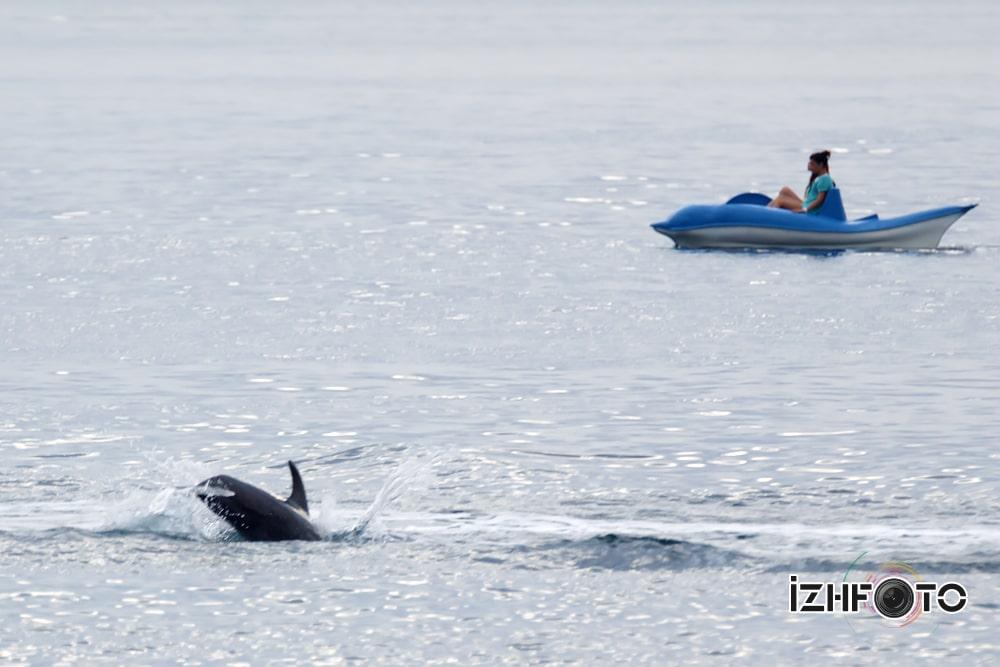 Дельфины приплыли к людям на черном море