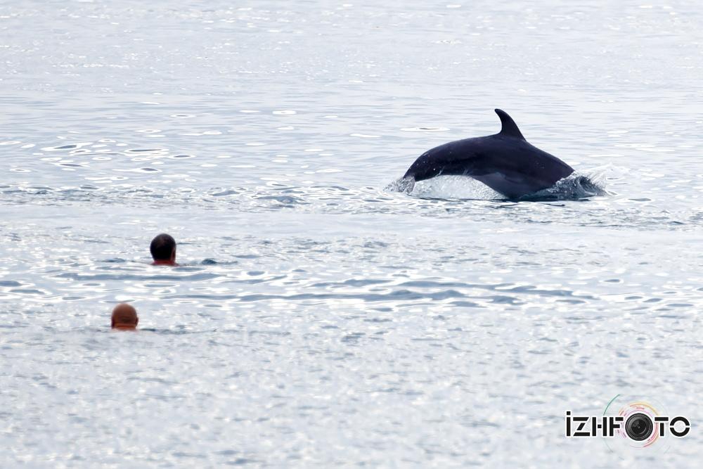 Фото того, как приплыли дельфины