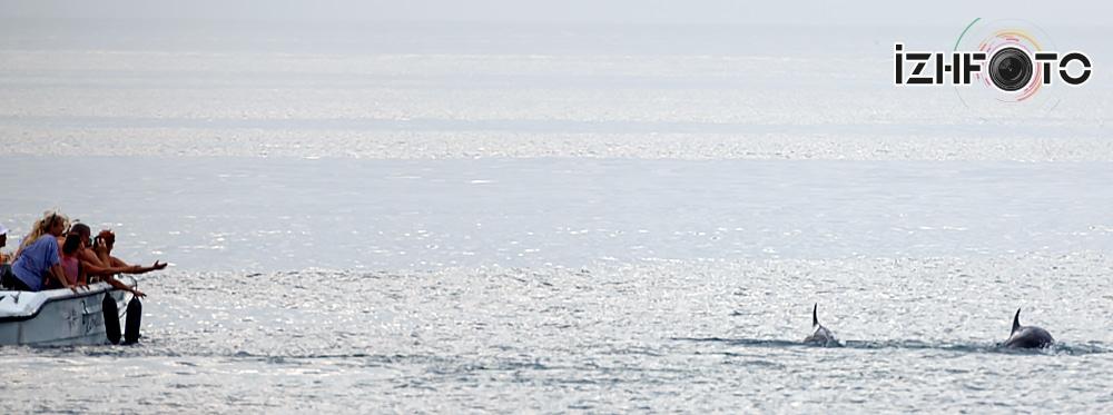 Дельфины приплыли на пляж к людям