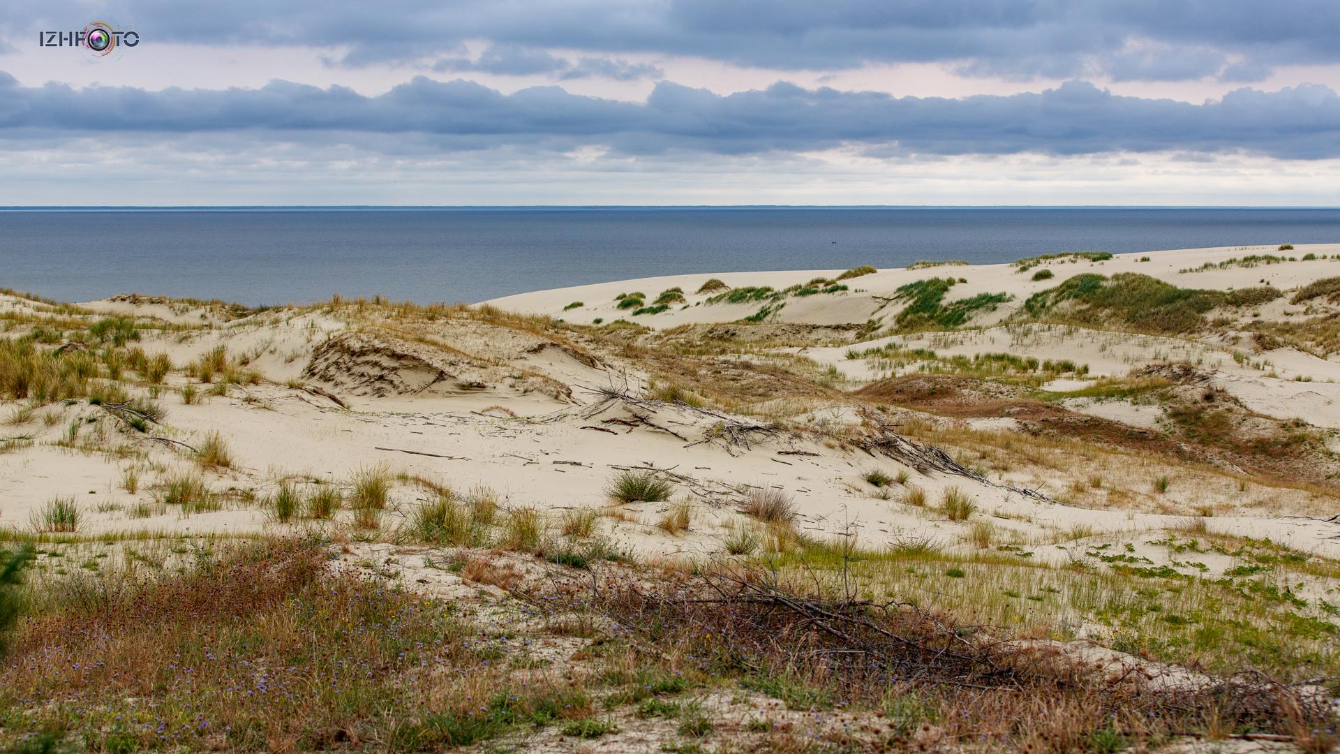 Фото песчаных дюн у Куршского залива Калининградская область