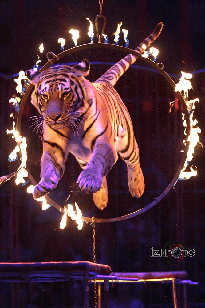 Фестиваль циркового искусства 2017 Ижевск