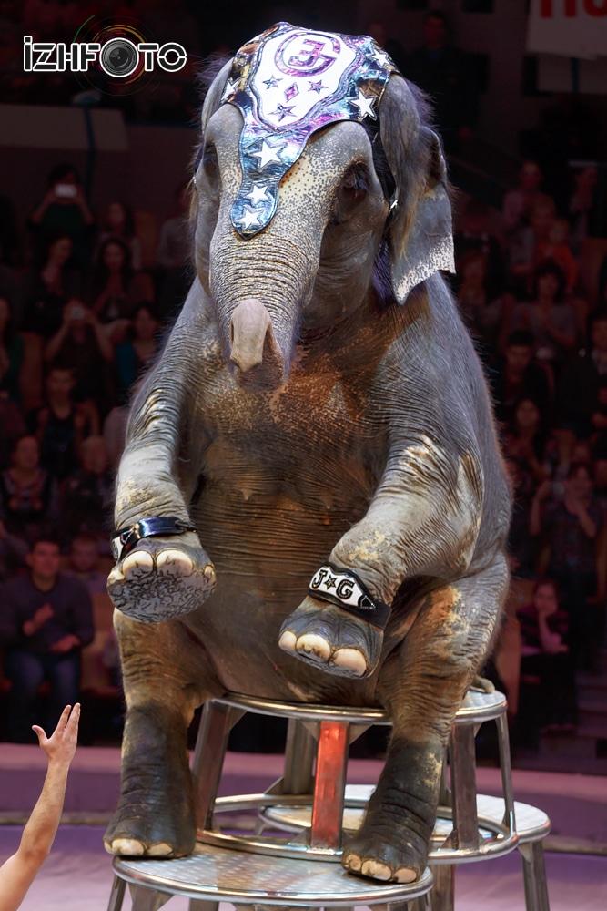 Ижевск цирк программа