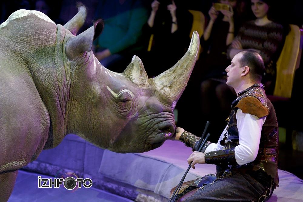 Сергей Нестеров и дрессированный носорог