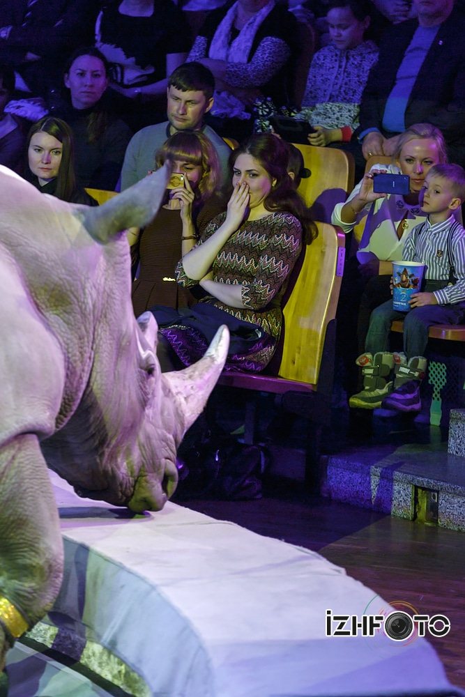 """Rhinoceros"" trainer Sergey Nesterov ""Safari"" circus Russia"