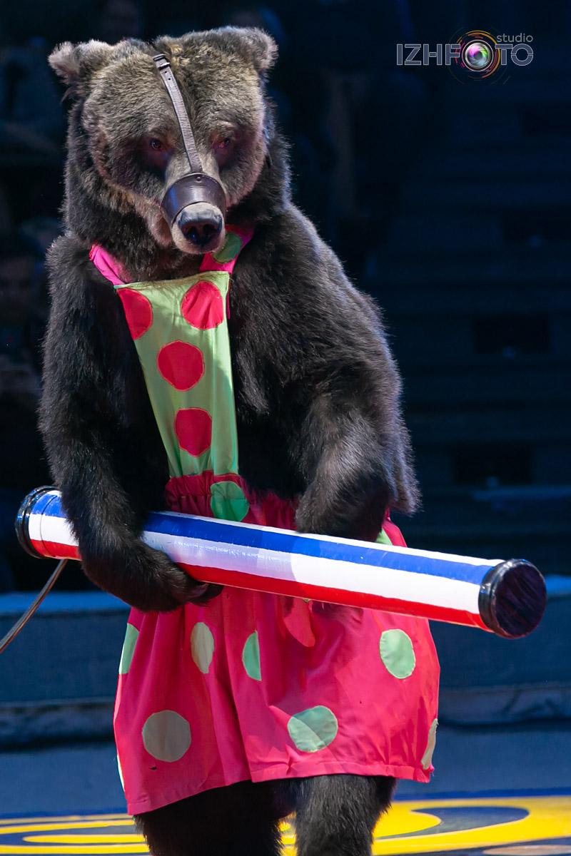 Номера с дрессированными медведями в цирке Фото