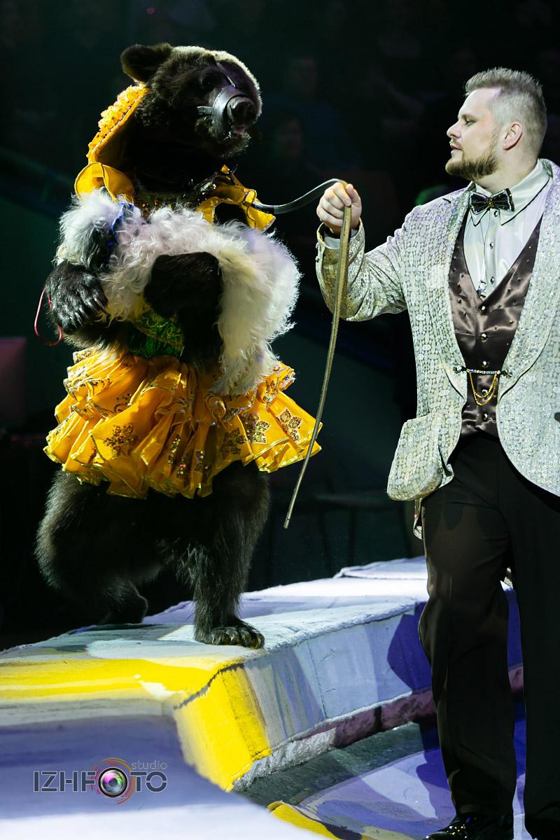 Цирковые медведи Филатовых Фото