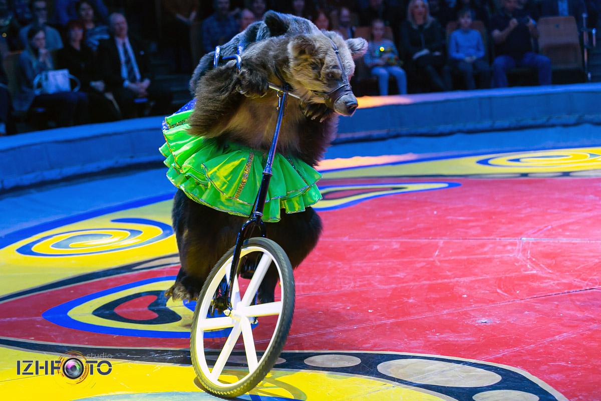 Цирковые шоу с цирковыми животными