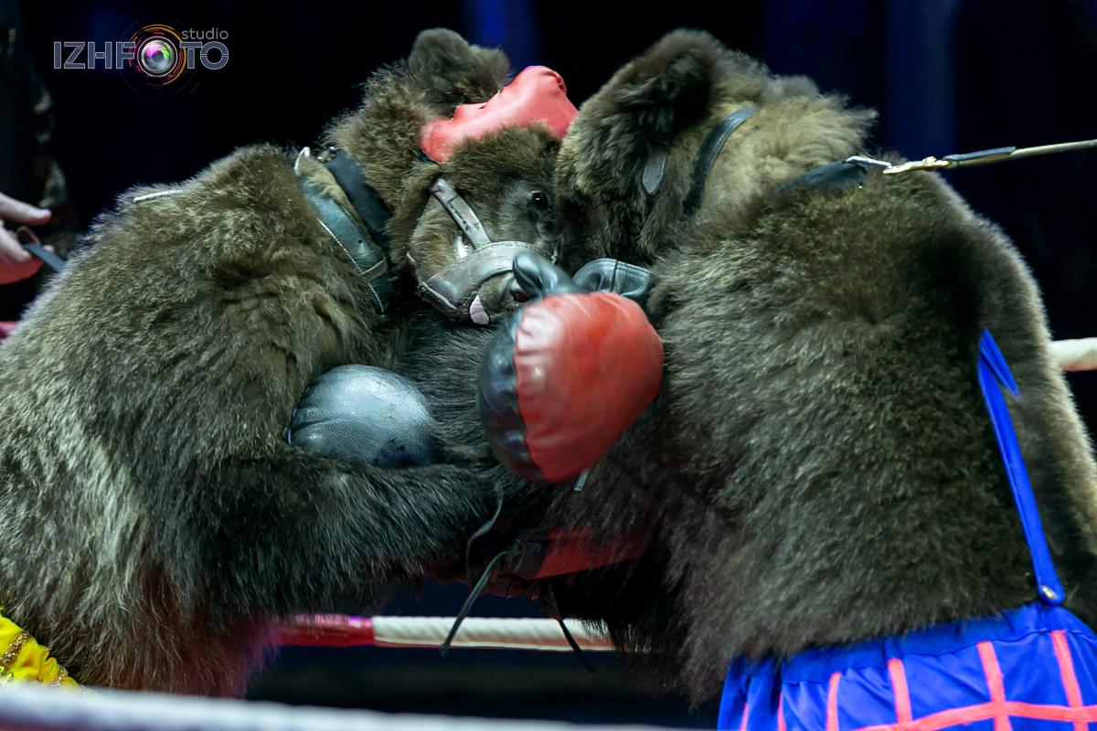 Фото с Фестиваля циркового искусства в Ижевске