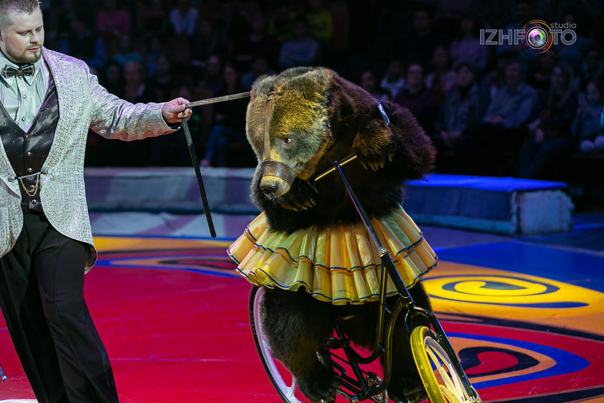 Медведи на велосипеде в Цирке Фото