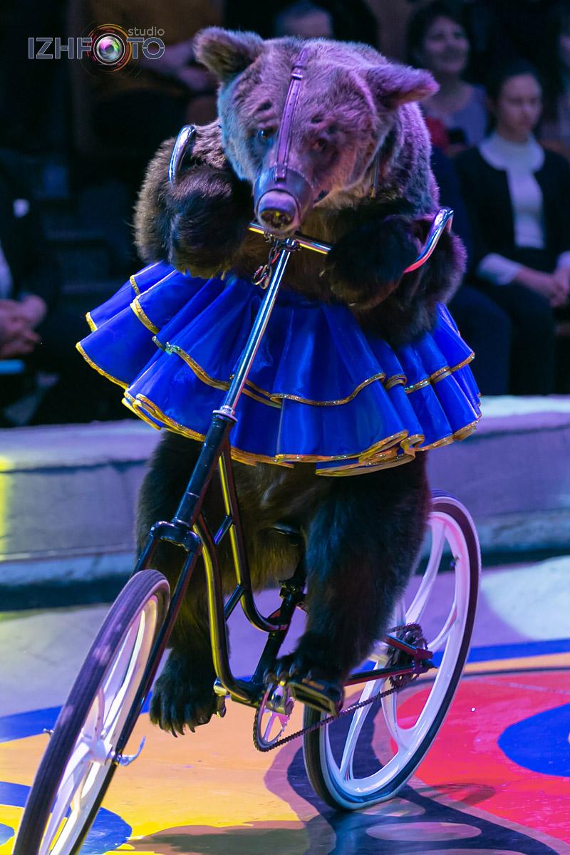 Медведи на манеже цирка Фото